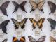 muzej-zoologii-bespozvonochnyx-800x450