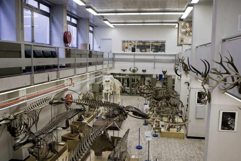 Музей зоологии Гентского университета